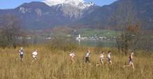 Schon seit Jahren führt die Route die Läufer durch das Schilf um den Wolfgangsee